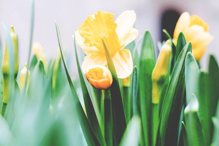 Schöne gelbe Bumen | blumenfee gutschein