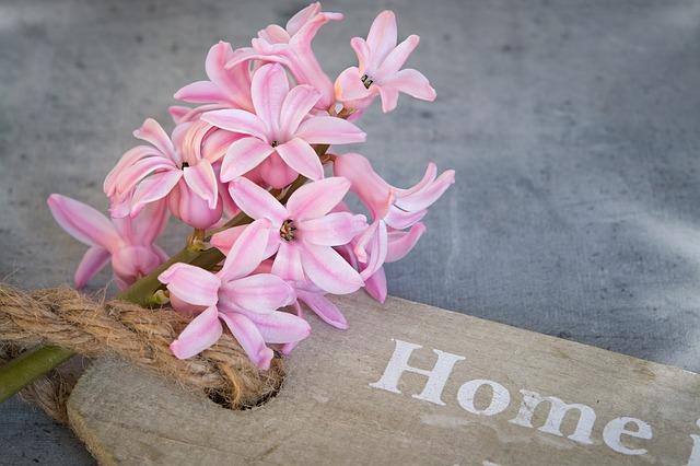 Eine rosafarbene Hyazinthe   Rabattcoupons