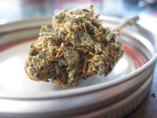 Eine Marihuanaknolle auf einem Teller | Rabatte Coupons
