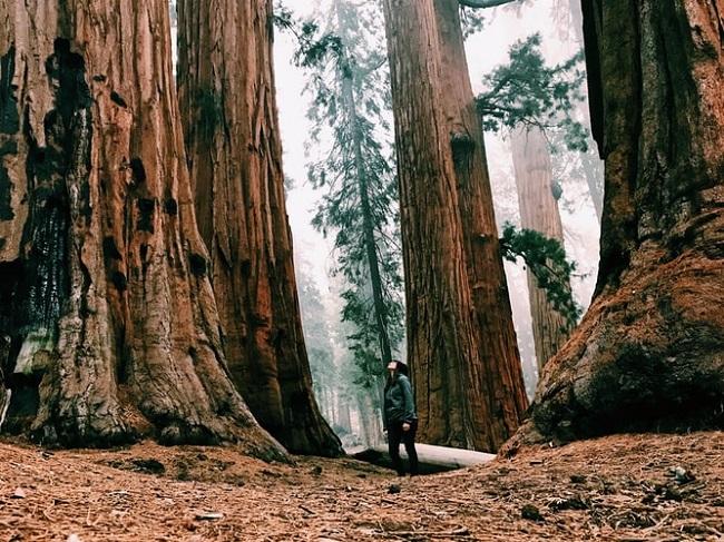 Große Bäume   Rabatte Coupons