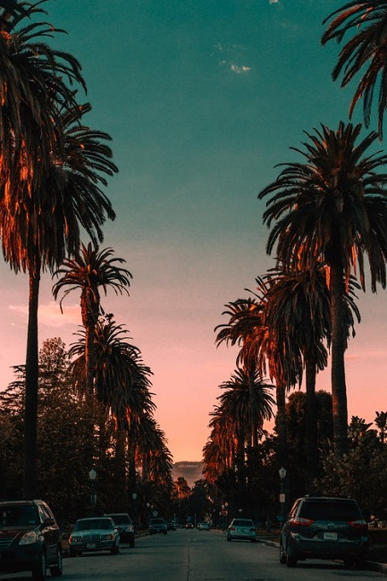 Palmen | Rabatte Coupons