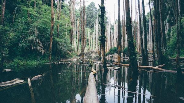 Eine feuchte und grüne Sumpflandschaft   Rabatte Coupons