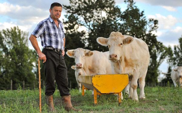 Ein Farmer mit seinen Rindern   RAbattcoupons