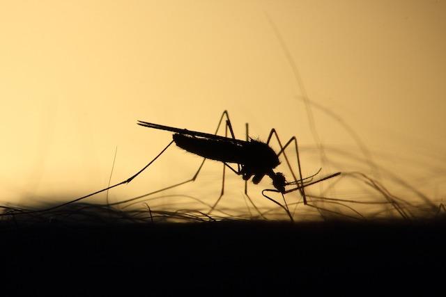 Ein Schatten einer Mücke | Rabatt Coupons