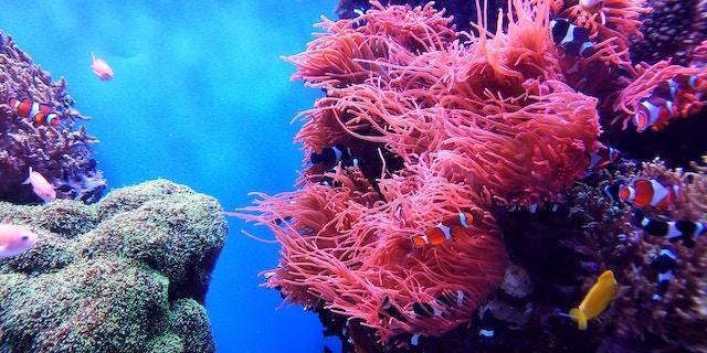 Unterwasserwelt mit Korallenriffen | Rabatte Coupon