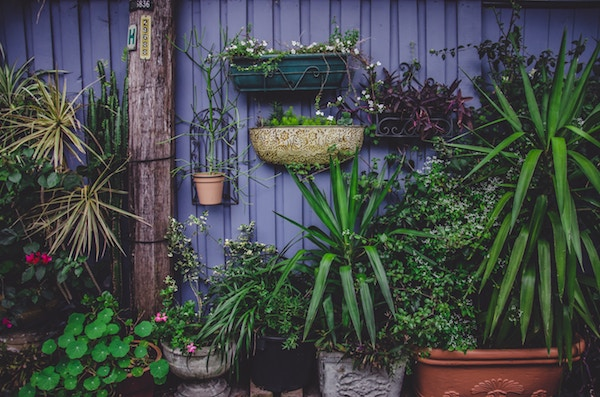 Kübelpflanzen dekorativ in Szene gesetzt