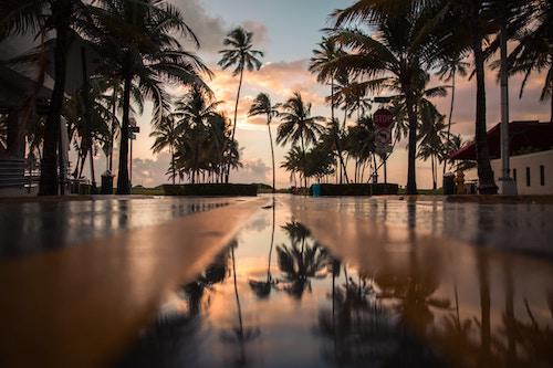 Ein Sonnenuntergang nebst Palmen | Rabattcoupon