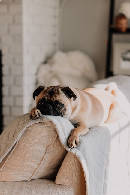 Hund auf Sofa | rabatte coupon