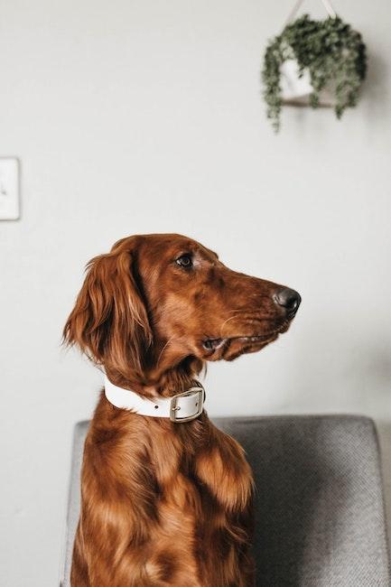 Hund auf Stuhl | rabatte coupons