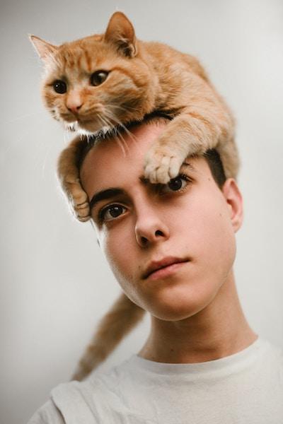 Katzen erziehen | Katze | www.rabatt-coupon.com
