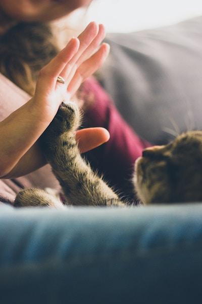 Katzen erziehen | Katze || www.rabatt-coupon.com