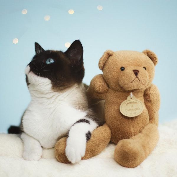 Eine Katze und ein Teddy sitzen zusammengekuschelt da   rabatte coupon