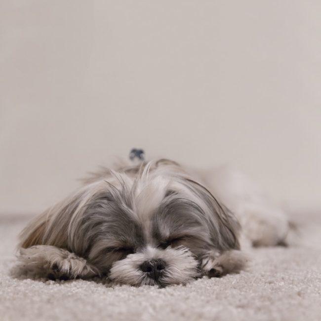 kleiner flauschiger Hund | rabatte coupons