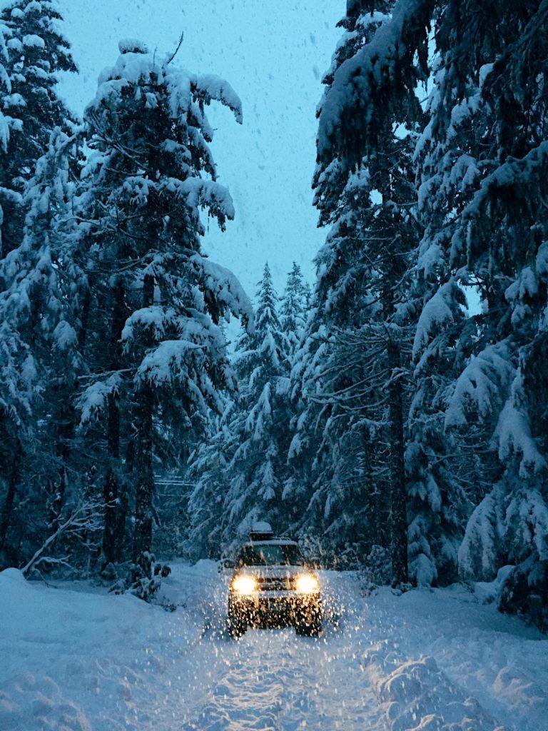 Auto im Wald | rabatte coupons