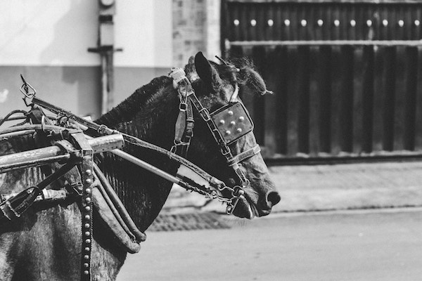 Altertümliches Pferd | rabatte coupons