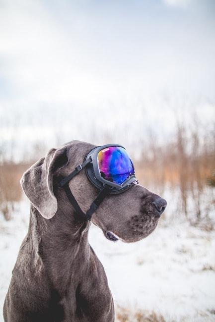 Hund | Bergfreunde Gutscheind