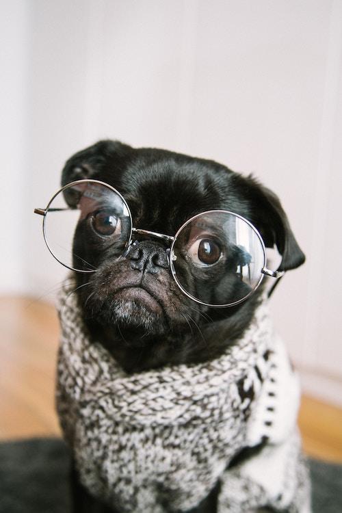 Brillen können allen stehen | rabatte coupons
