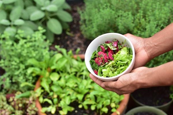 Gemüse selbst anbauen und gleichzeitig sparen. Jetzt mit Tom Garten.