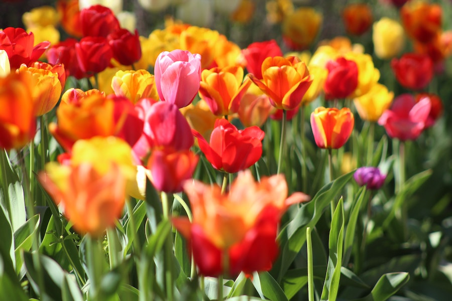 Garten Ostern Gutschein | www.rabatt-coupon.com