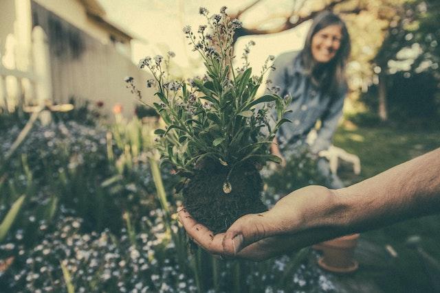Eine Pflanze | rabatte coupons