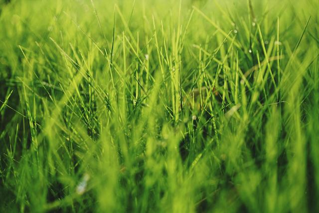 Ein Bild von saftig grünem Gras | rabatte coupons