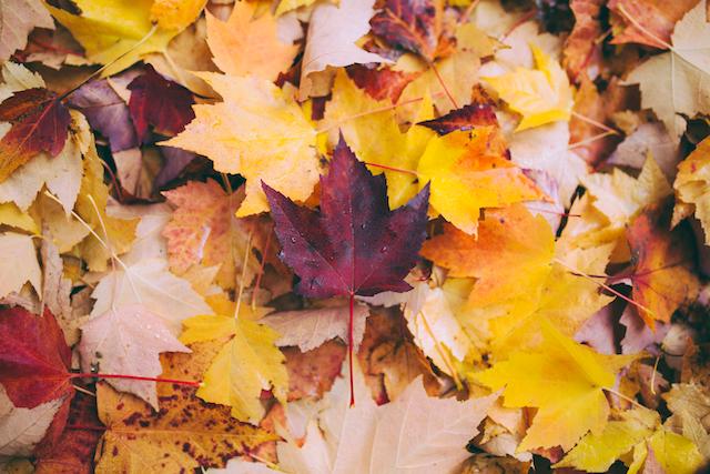 Viele bunte Herbstblätter | rabatte coupons