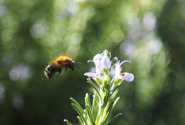 Eine große Biene steuert auf eine zarte Pflanze zu | rabatte coupons