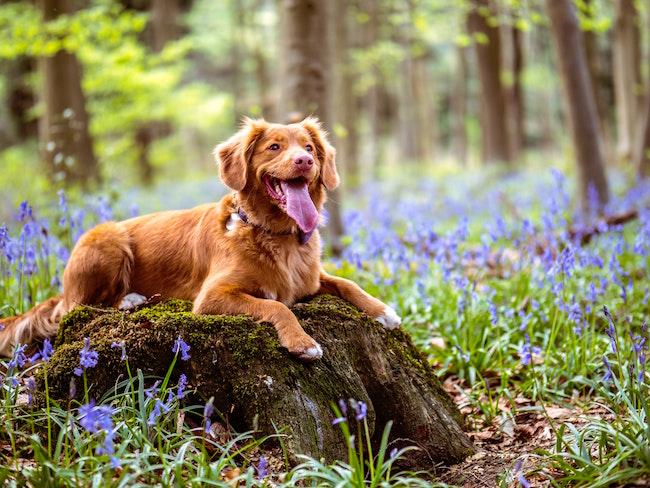 Haustiere kaufen und Zubehör Josera Gutschein | www.rabatt-coupon.com