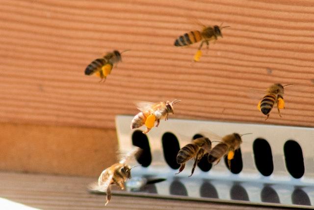 Ein paar Bienen fliegen gerade zum Bienenstock | rabatte coupons