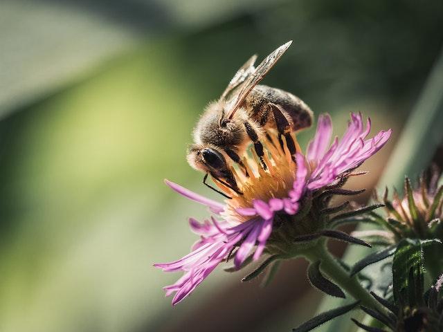 Eine Biene auf einer lila Pflanze | rabatte coupons