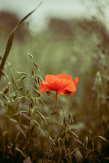 Coupon Garten | Hausmittel gegen Blattläuse | rabatte coupons