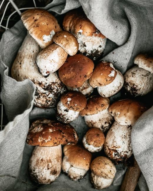 Pilze sammeln | Scheurichweine | www.rabatt-coupon.com