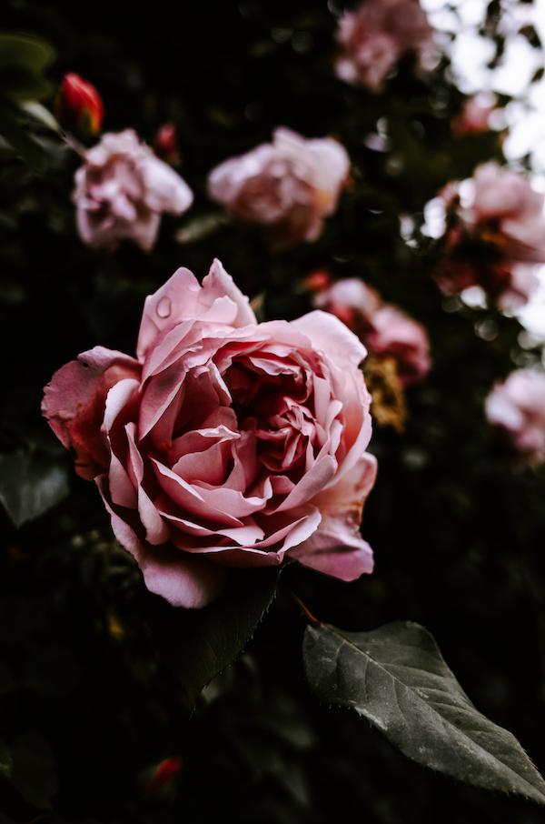 Garten winterfest machen   Blumen   Rabatt-Coupon