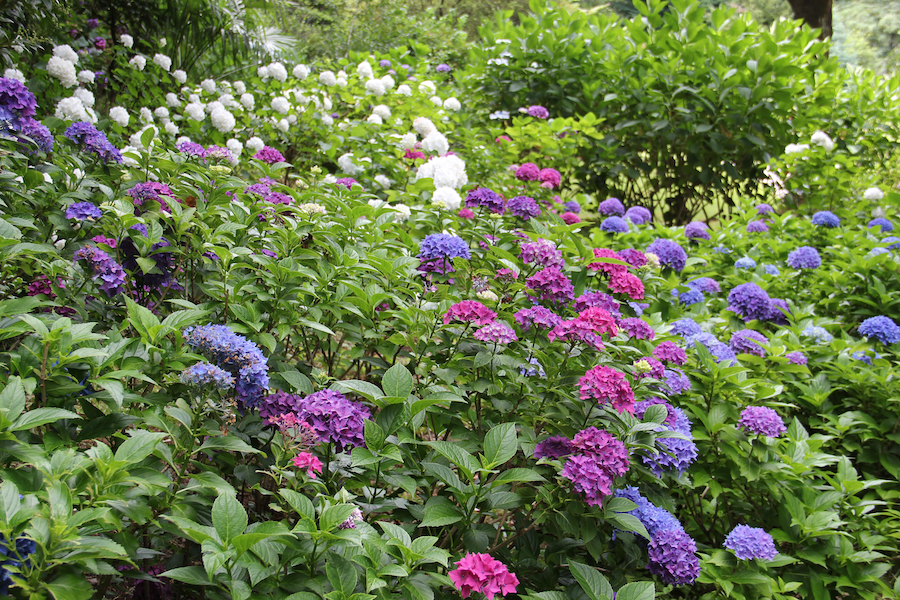 Garten im Herbst bepflanzen   Rabatt-Coupon.com