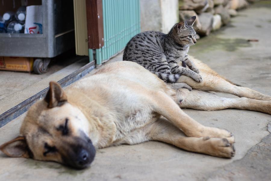 Hund und Katze | www.rabatt-couponc.om
