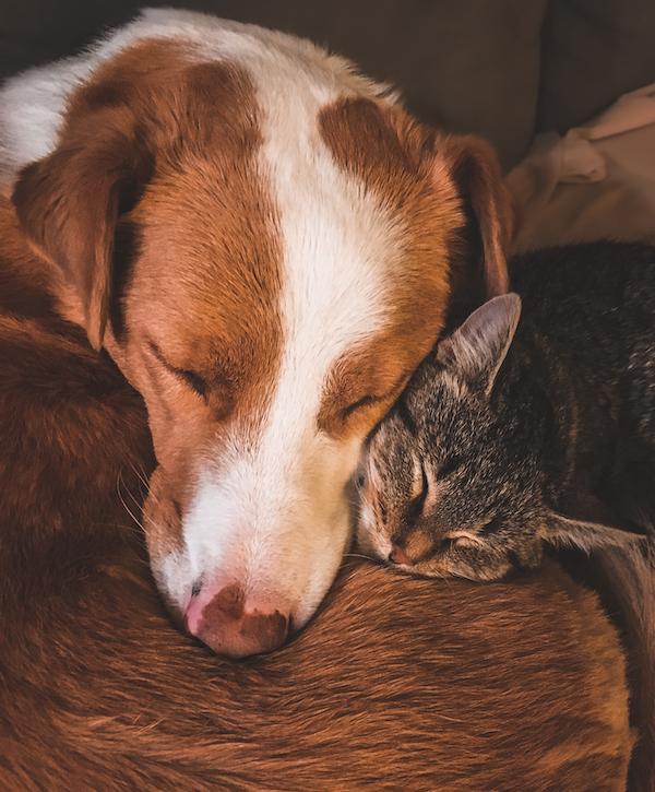 Wie gewöhne ich einen Hund an eine Katze | www.rabatt-coupon.com