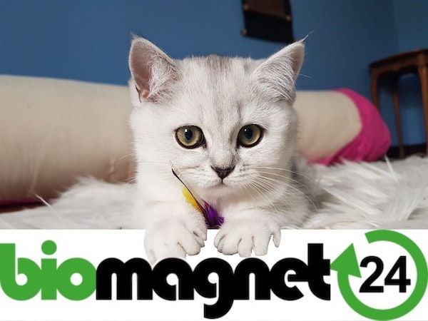 biomagnet24 | Rabattcoupon