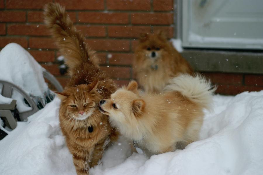 Haustiere vor Kälte schützen | www.rabatt-coupon.com