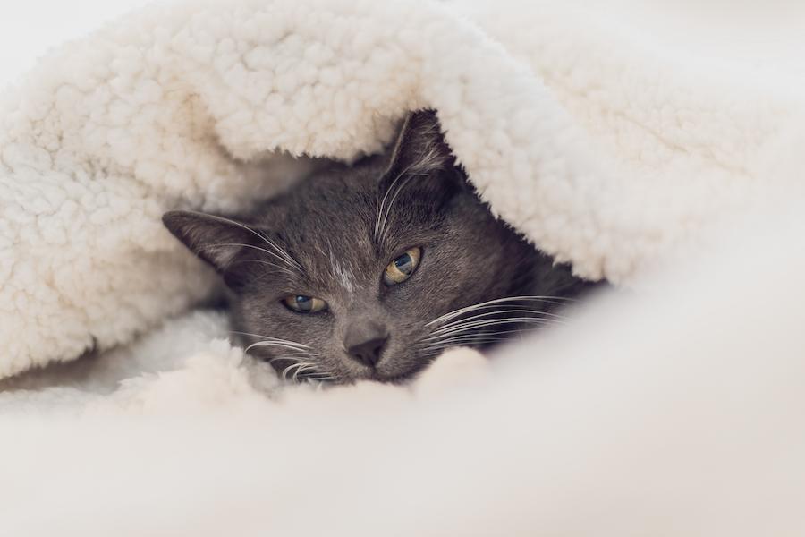 Haustier vor Kälte schützen | www.rabatt-coupon.com