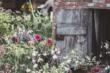 Gartenkalender 2021 | www.rabatt-coupon.com