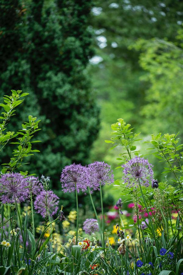 Gartenkalender 2021 | Rabatt-Coupon