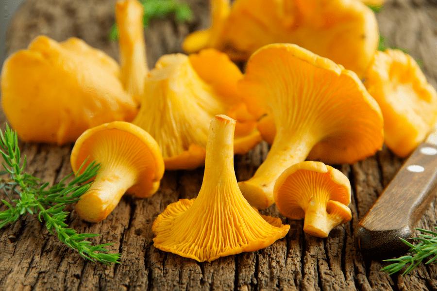 Pilze essbar | Pilze und Gesundheit | www.rabatt-coupon.com