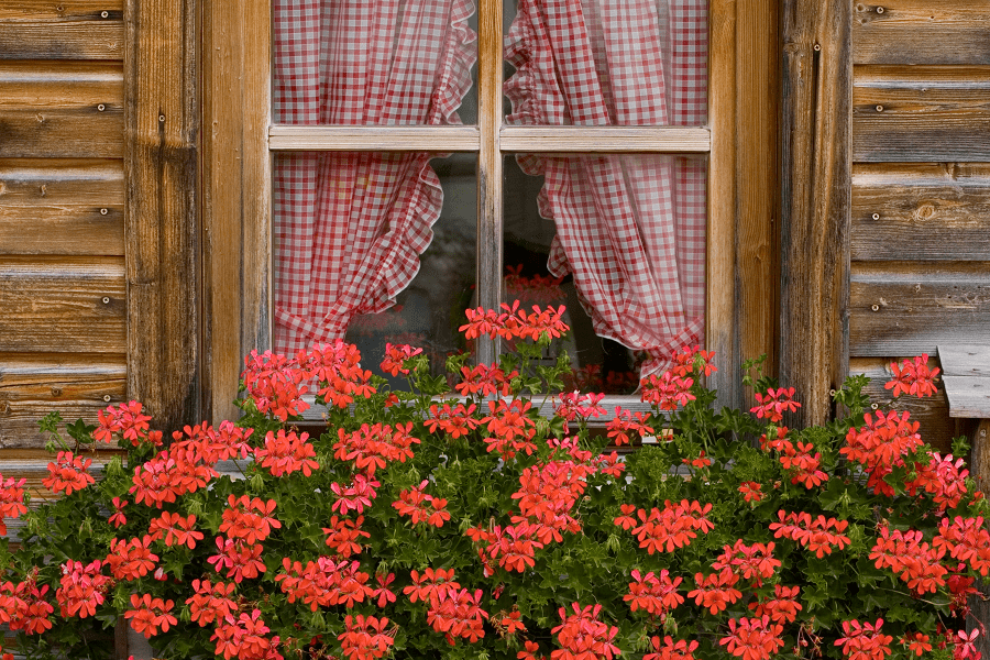 Balkonpflanzen im Sommer | Richtige Pflanzenpflege | www.rabatt-coupon.com
