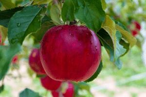 heutige Ernährungsformen | frutarier diät | www.rabatt-coupon.com